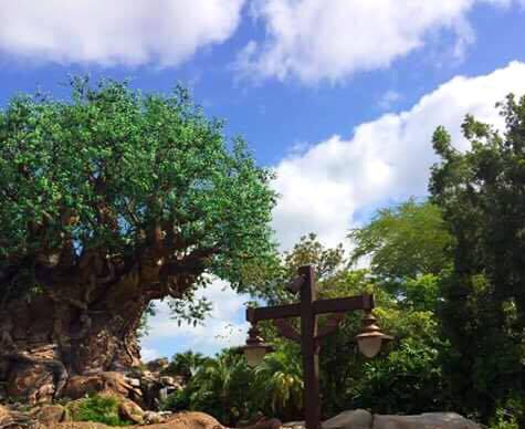 The Tree of Life in Disney's Animal Kingdom at Walt Disney World.