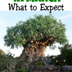 Disney World in March What to Expect Tree of Life from Disney's Animal Kingdom