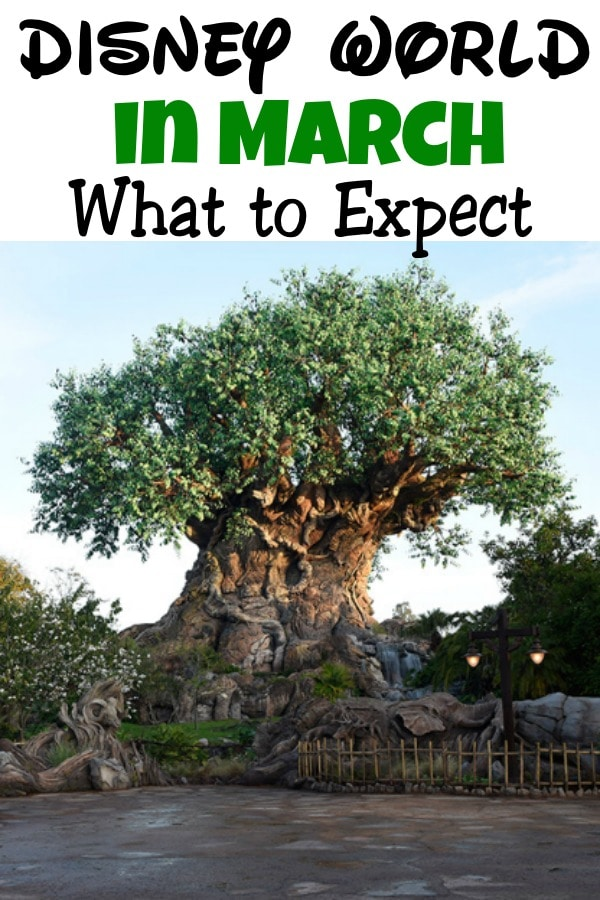 "Text ""Disney World in March What to Expect"" a picture of the Tree of Life from Disney's Animal Kingdom."