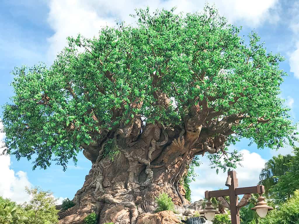 Tree of Life at Disney's Animal Kingdom