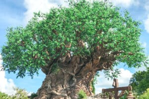 A large green tree called the Tree of Life at Disney's Animal Kingdom Theme Park