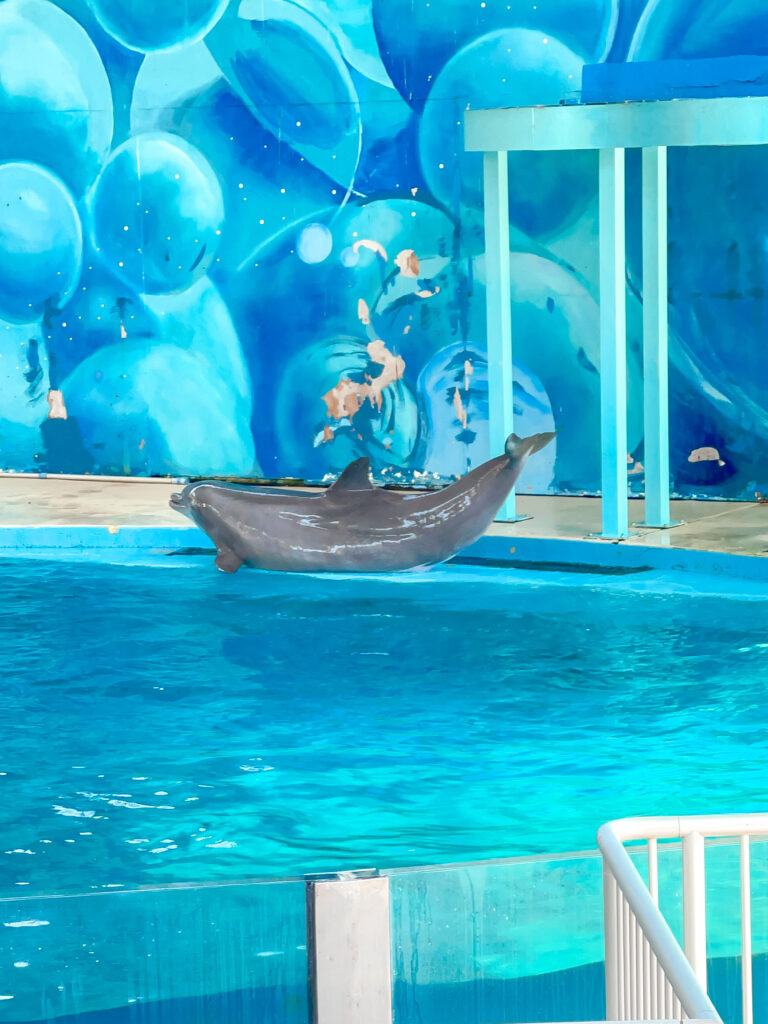 A dolphin in a pool at Six Flags Discovery Kingdom.