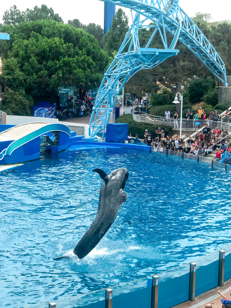 A dolphin jumping out of the water.