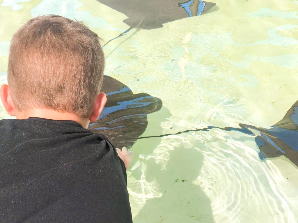 A boy touching a sting ray at Sea World.