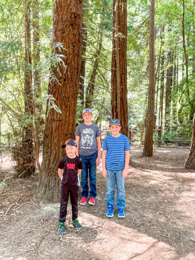 Three boys in front of Redwood trees at Redwood Regional Park.