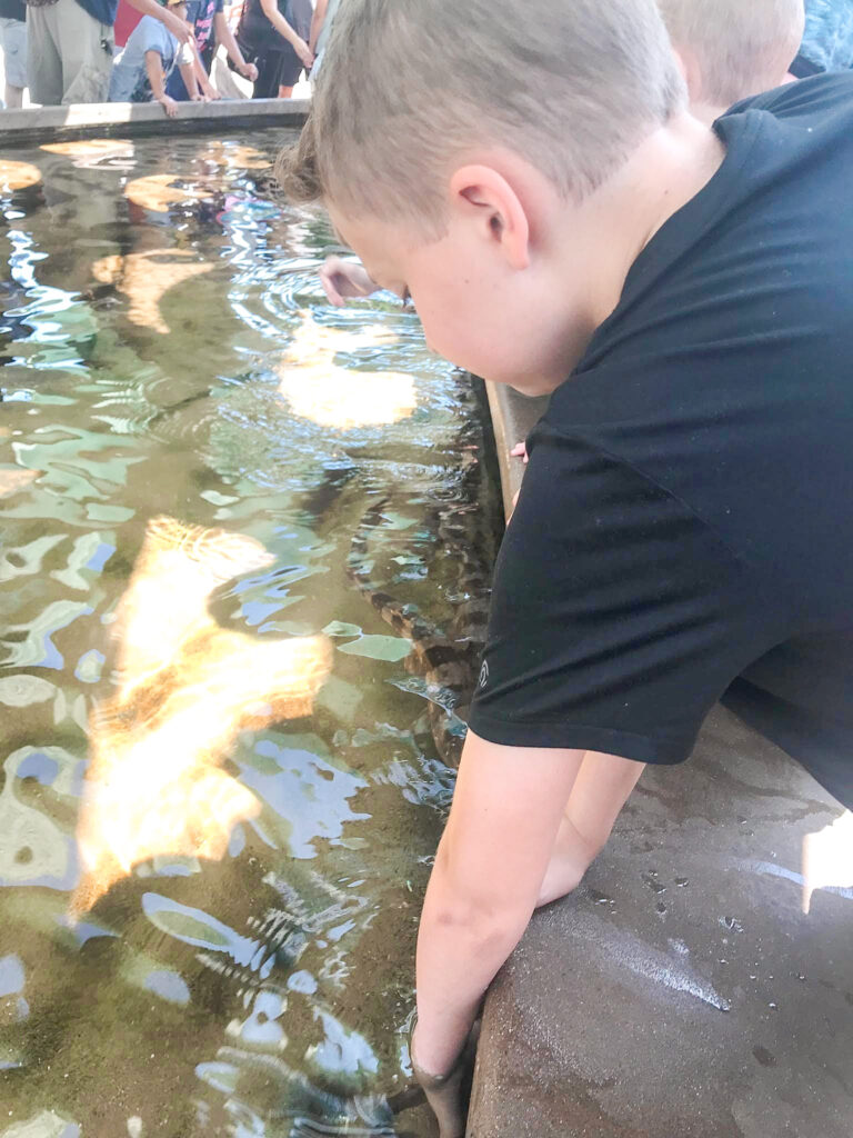 A boy touching tide pools at Sea World.