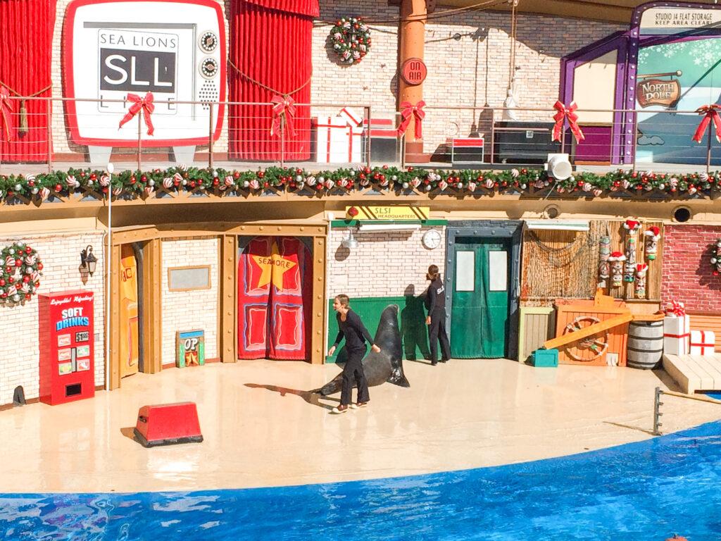 Sea lion show at Sea World San Diego.