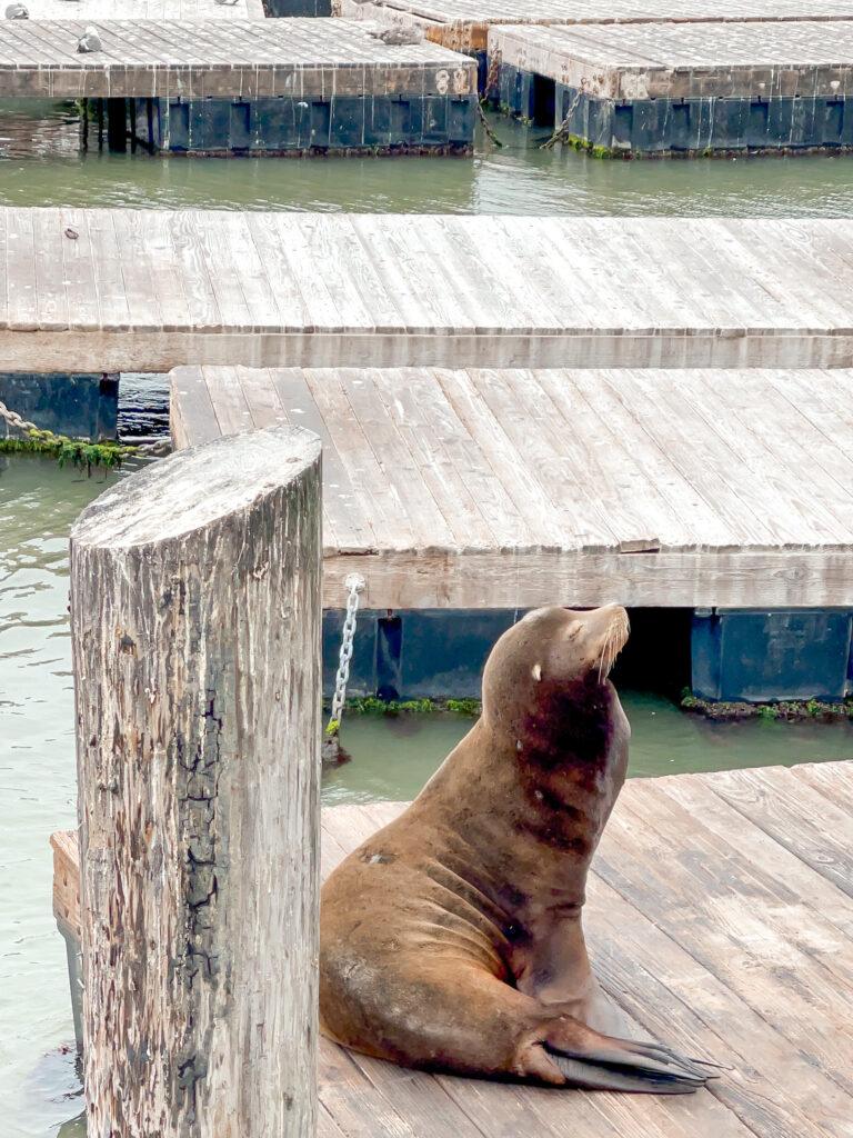 A sea lion at Pier 39.