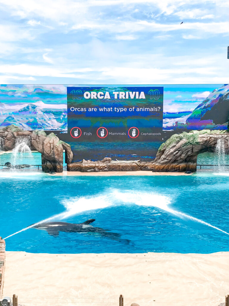 Orca encounter at Sea World San Diego.