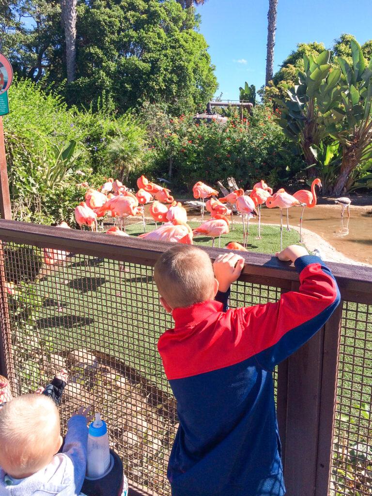 Kids looking at flamingos at Sea World.