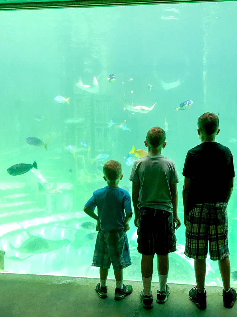 Three boys standing in front of an aquarium at Sea World.